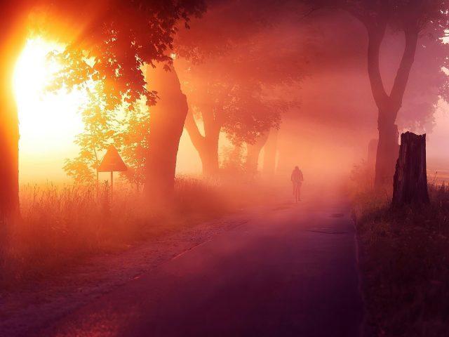 Солнечные лучи, проходящие между деревьями с туманной дорогой природы