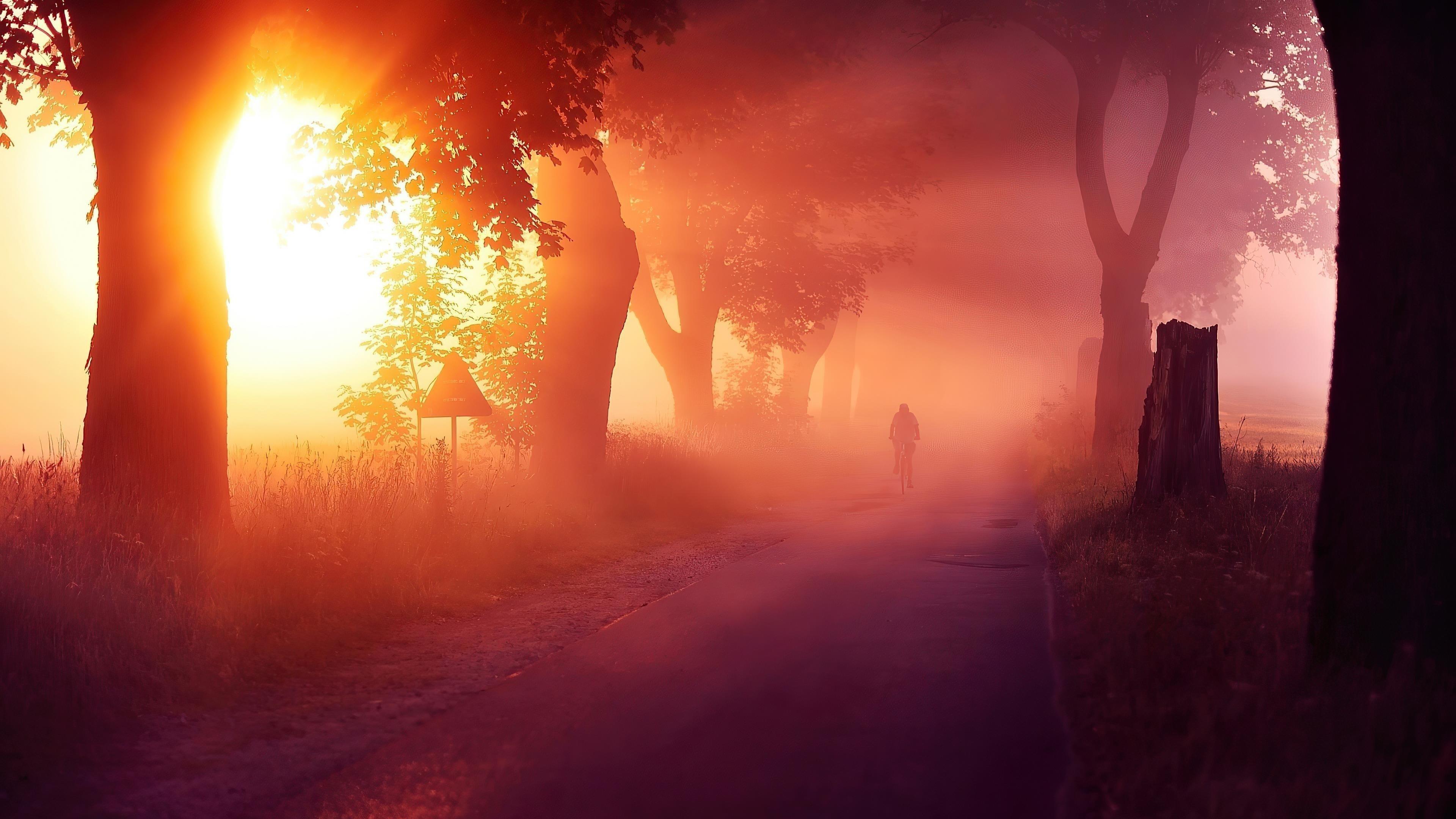 Солнечные лучи, проходящие между деревьями с туманной дорогой природы обои скачать