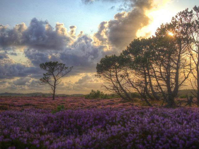 Солнце проходит сквозь зеленые деревья под пурпурным полем с облаками