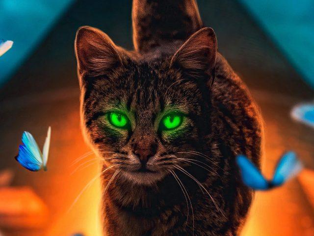 Кошачья волшебная прогулка