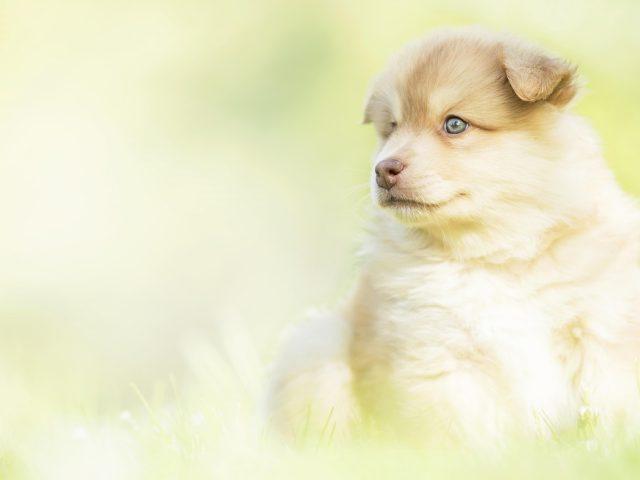 Животное щенок животные