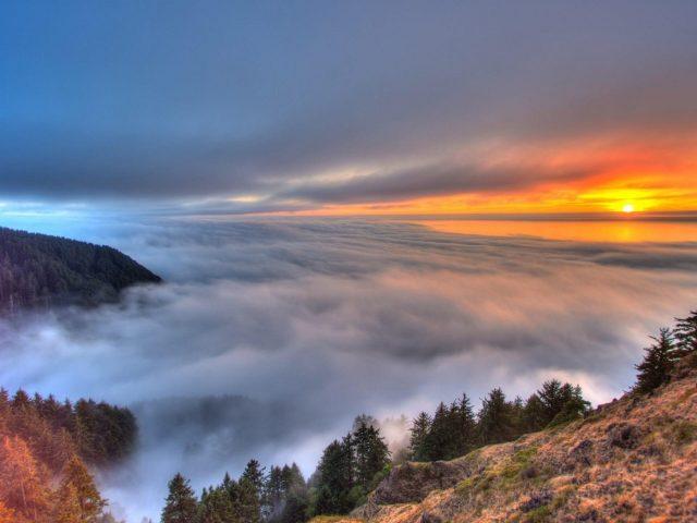 Туман покрыл деревья горы под белым желтым черным облачным небом природа