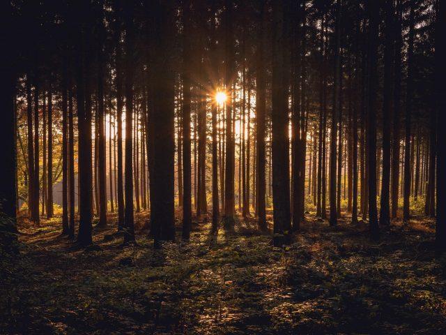 Солнечный свет, проходящий через темные деревья в лесу во время заката солнца природа