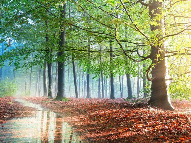 Туман осенняя зелень деревьев с отражением на лужице природа