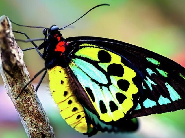 Красивая разноцветная деревянная палочка-бабочка на сине-зеленом фоне бабочка
