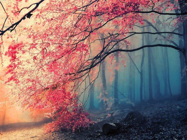Заснеженный лес с розовым цветущим деревом природа