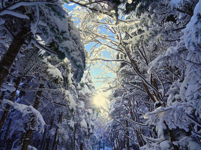 Червячный глаз вид заснеженного леса ели сосны зима
