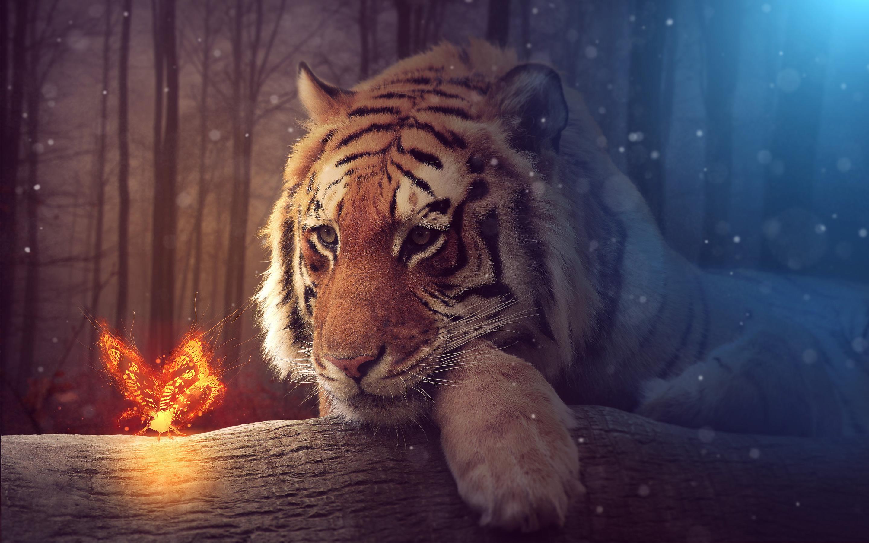 Big tiger. обои скачать