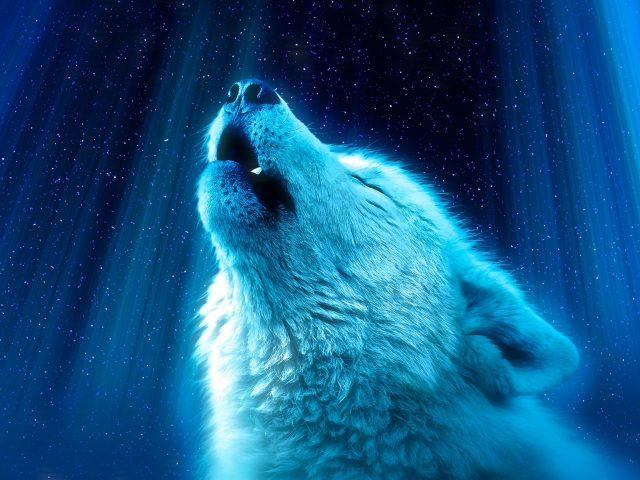 Не волк