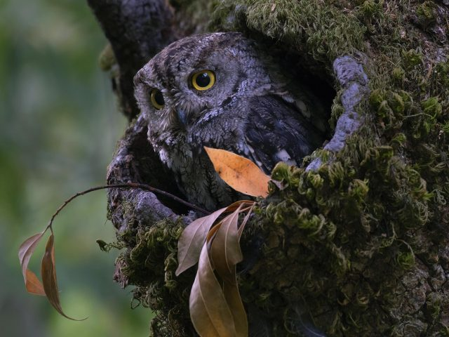 Животное сова животные