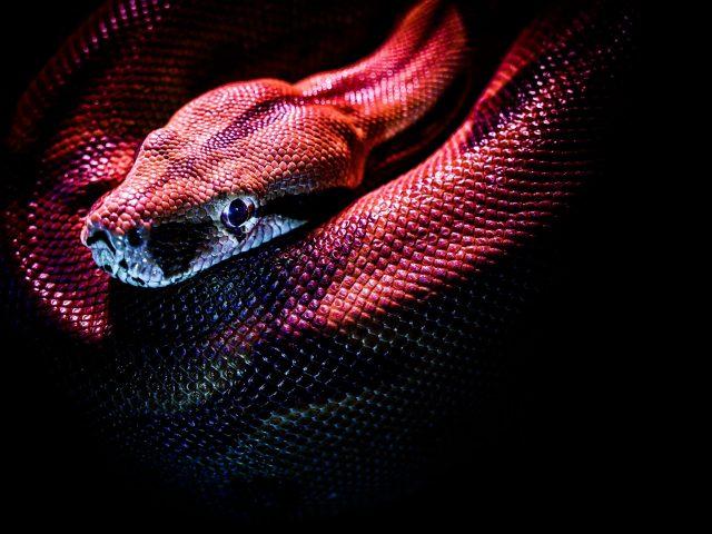 Дикая змея