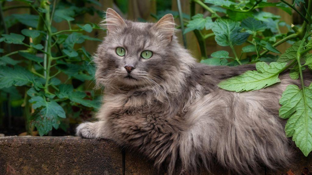 Коричневая кошка с зелеными глазами сидит возле растения кошка обои скачать