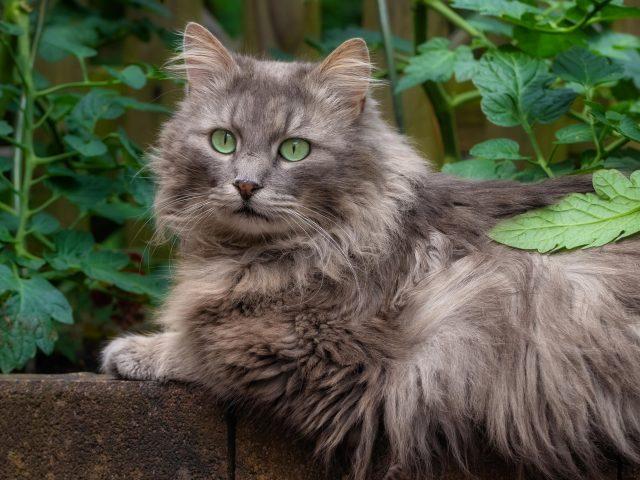 Коричневая кошка с зелеными глазами сидит возле растения кошка