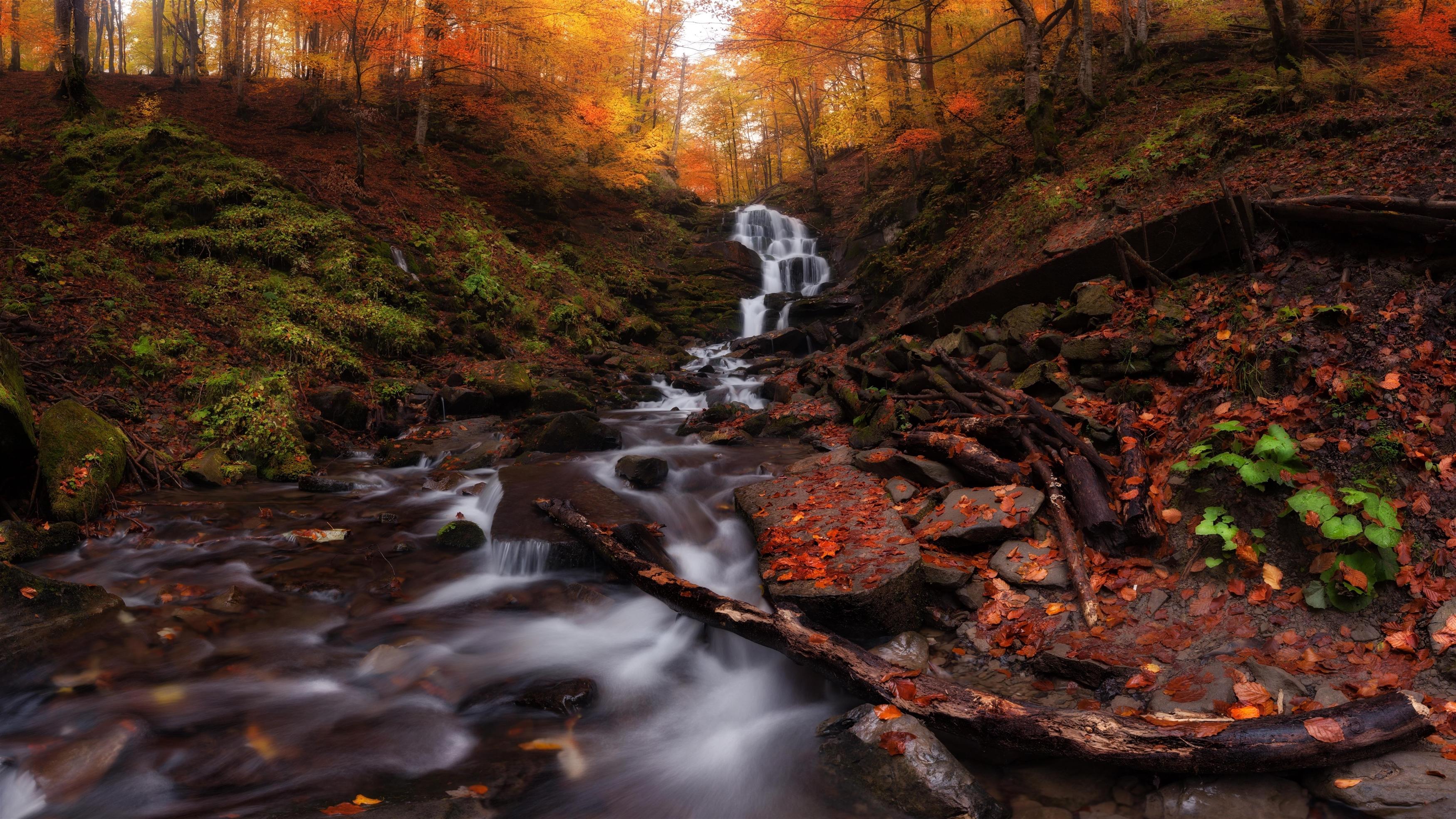 Осенний лес водопад обои скачать