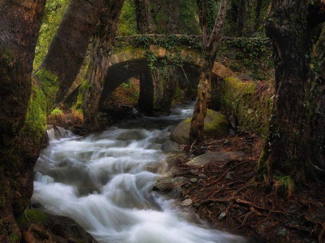 Зеленые деревья покрыли искусственный мост с водопадом в лесной природе