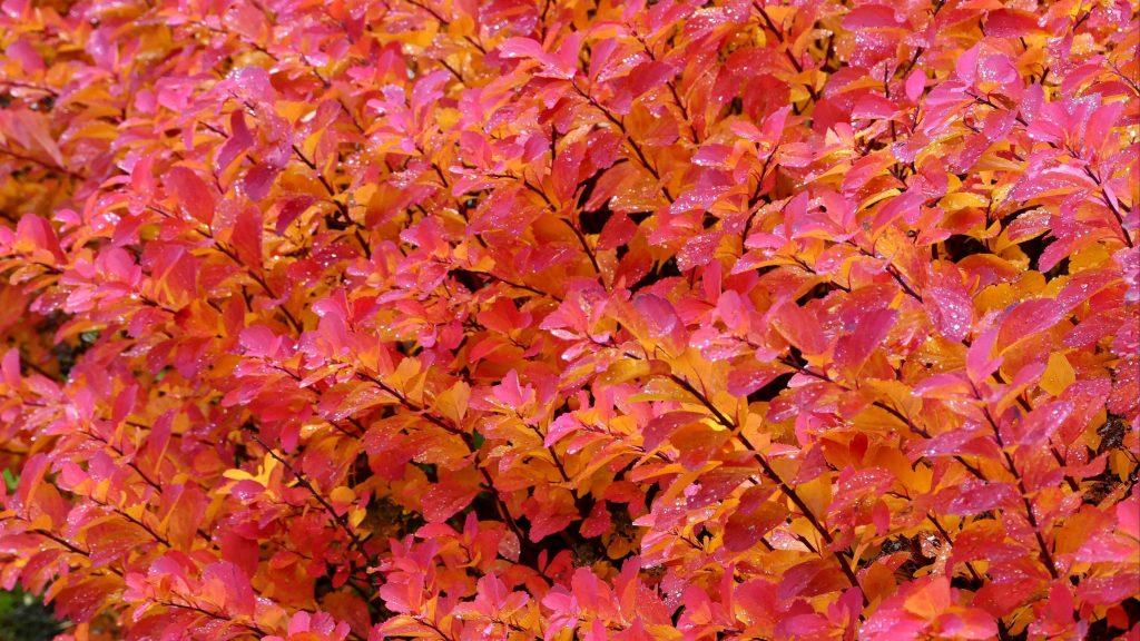 Розовые желтые листья ветви растений природа обои скачать