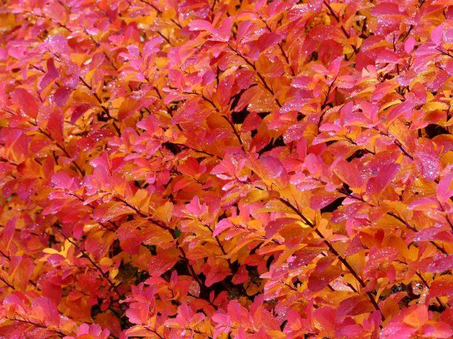 Розовые желтые листья ветви растений природа