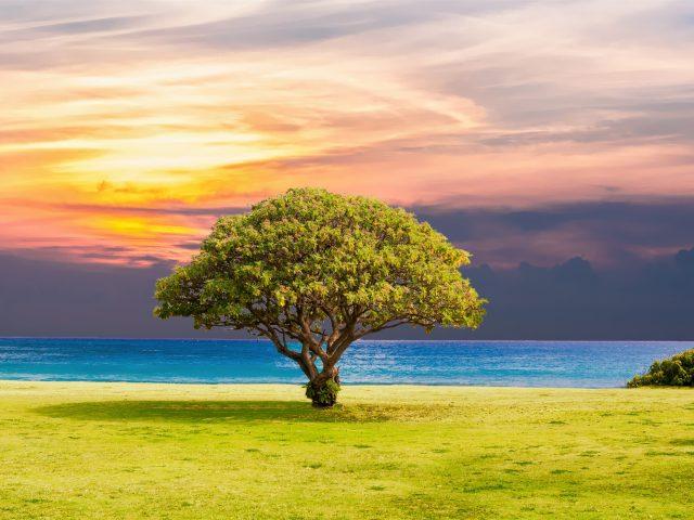 Дерево трава оушен Бич пейзаж