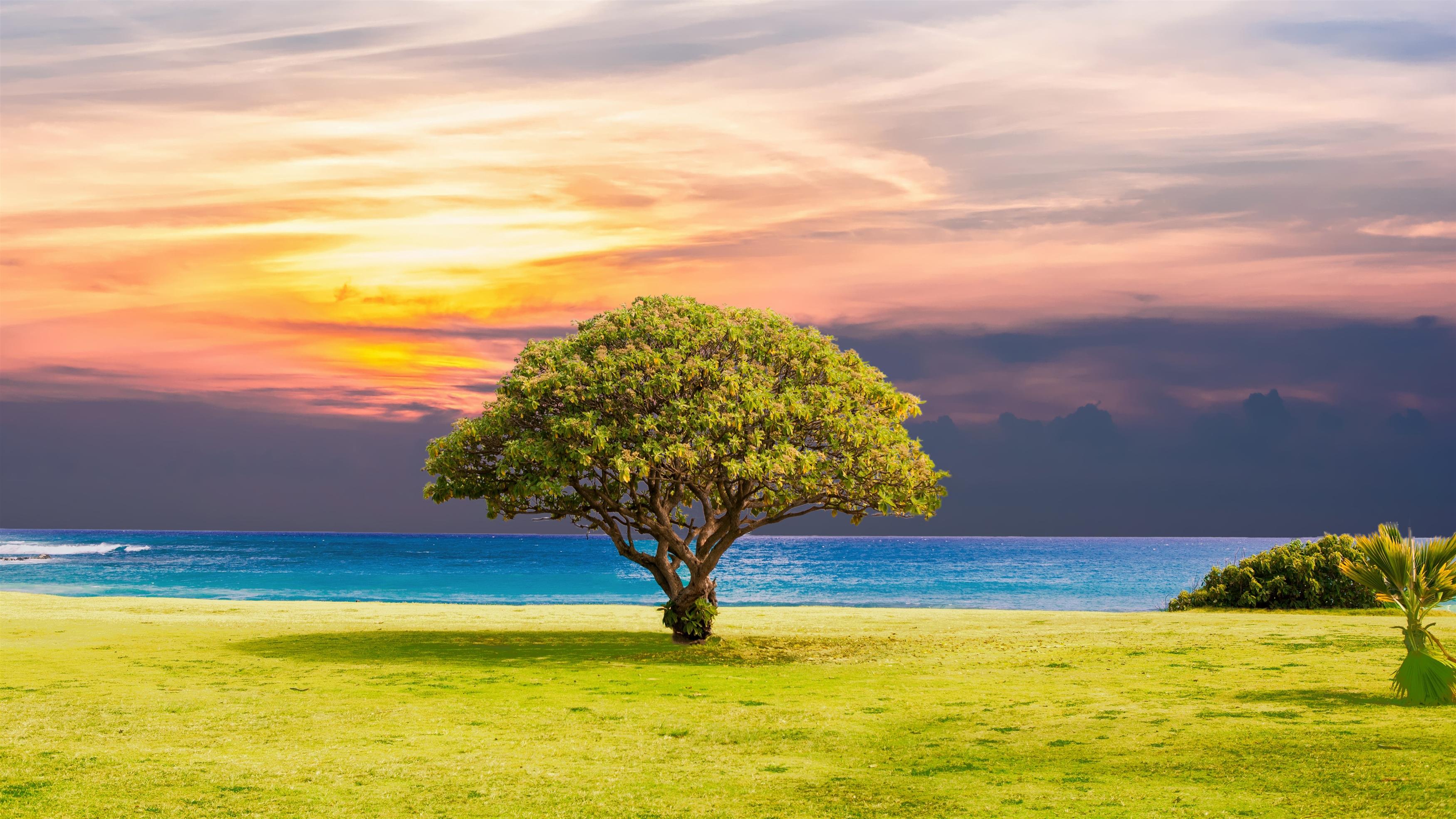 Дерево трава оушен Бич пейзаж обои скачать