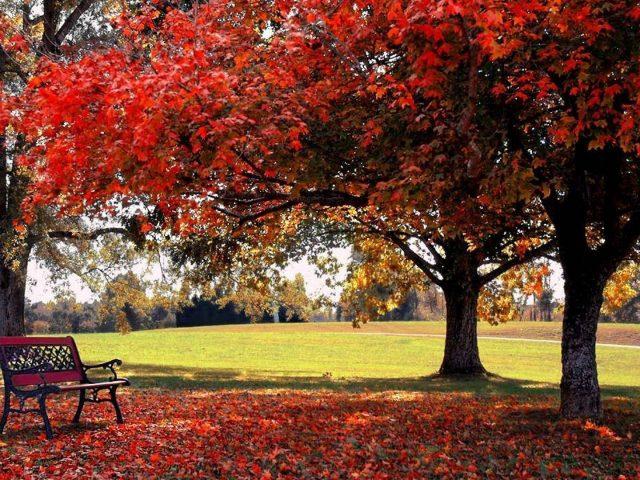 Красная осень осенние листья деревьев ветви скамейка зеленая трава поле природа