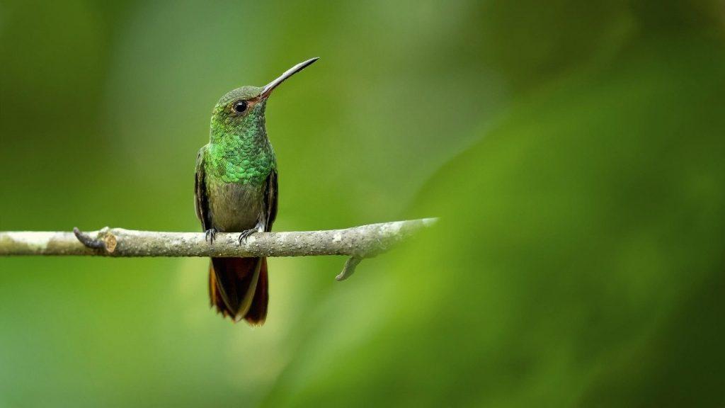Зеленая черная птица с острым клювом сидит на ветке дерева на зеленом фоне птиц обои скачать