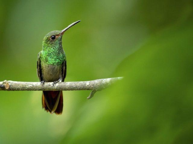 Зеленая черная птица с острым клювом сидит на ветке дерева на зеленом фоне птиц