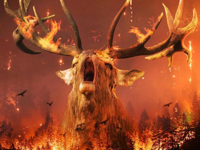 Сибирский лесной пожар