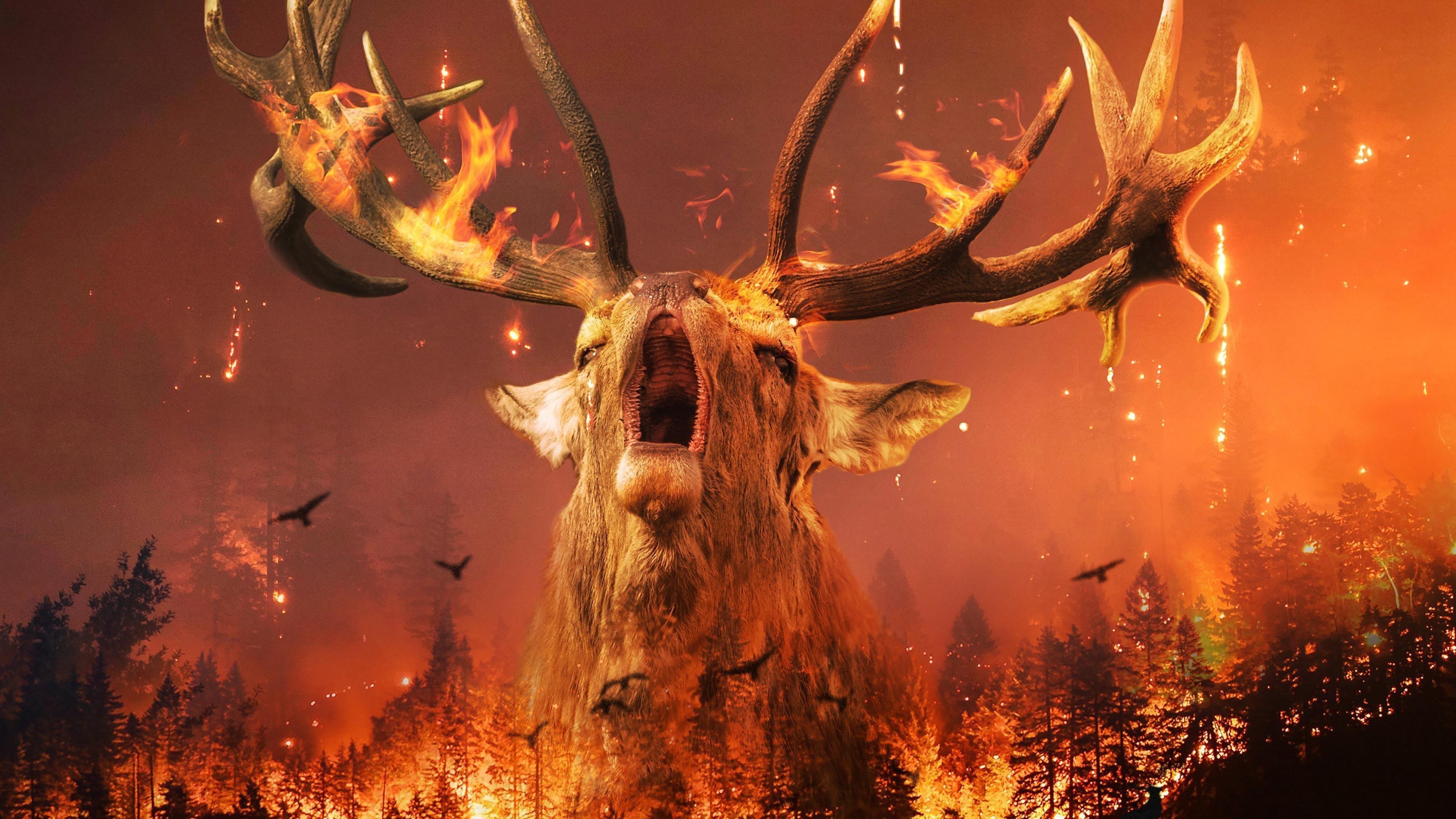 Сибирский лесной пожар обои скачать
