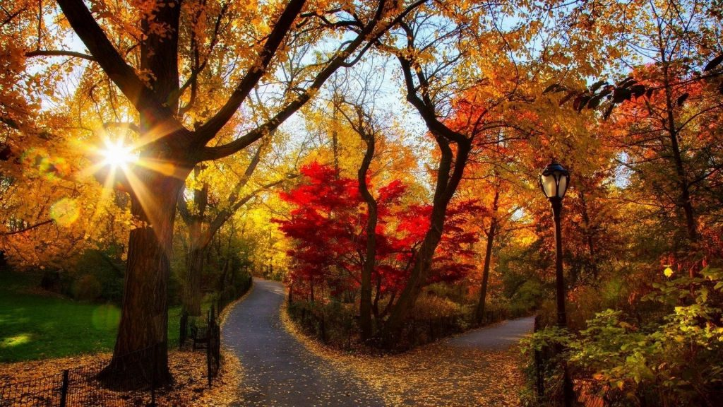 Дорога между осенними осенними деревьями с фонарным столбом с солнечным лучом природа обои скачать