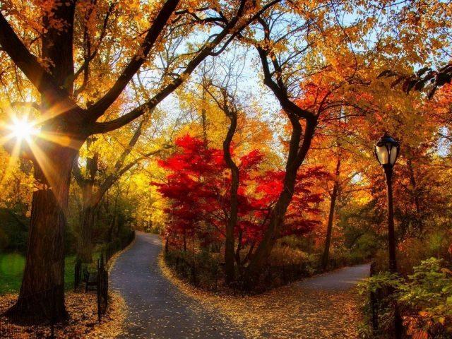 Дорога между осенними осенними деревьями с фонарным столбом с солнечным лучом природа