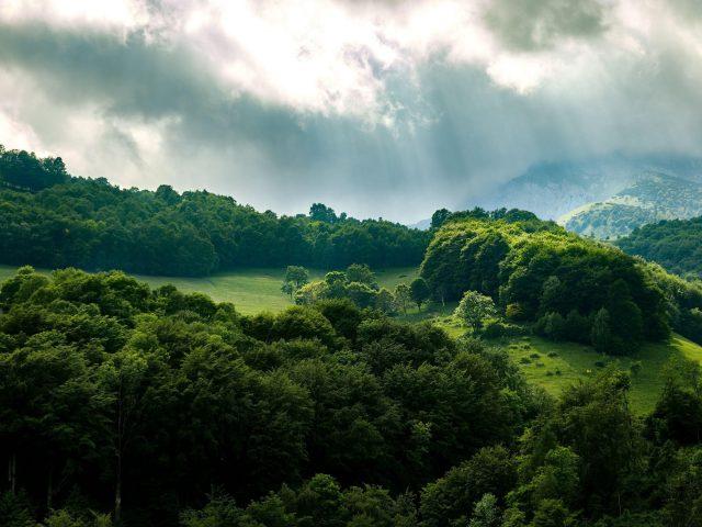 Зеленый лес деревья лучи