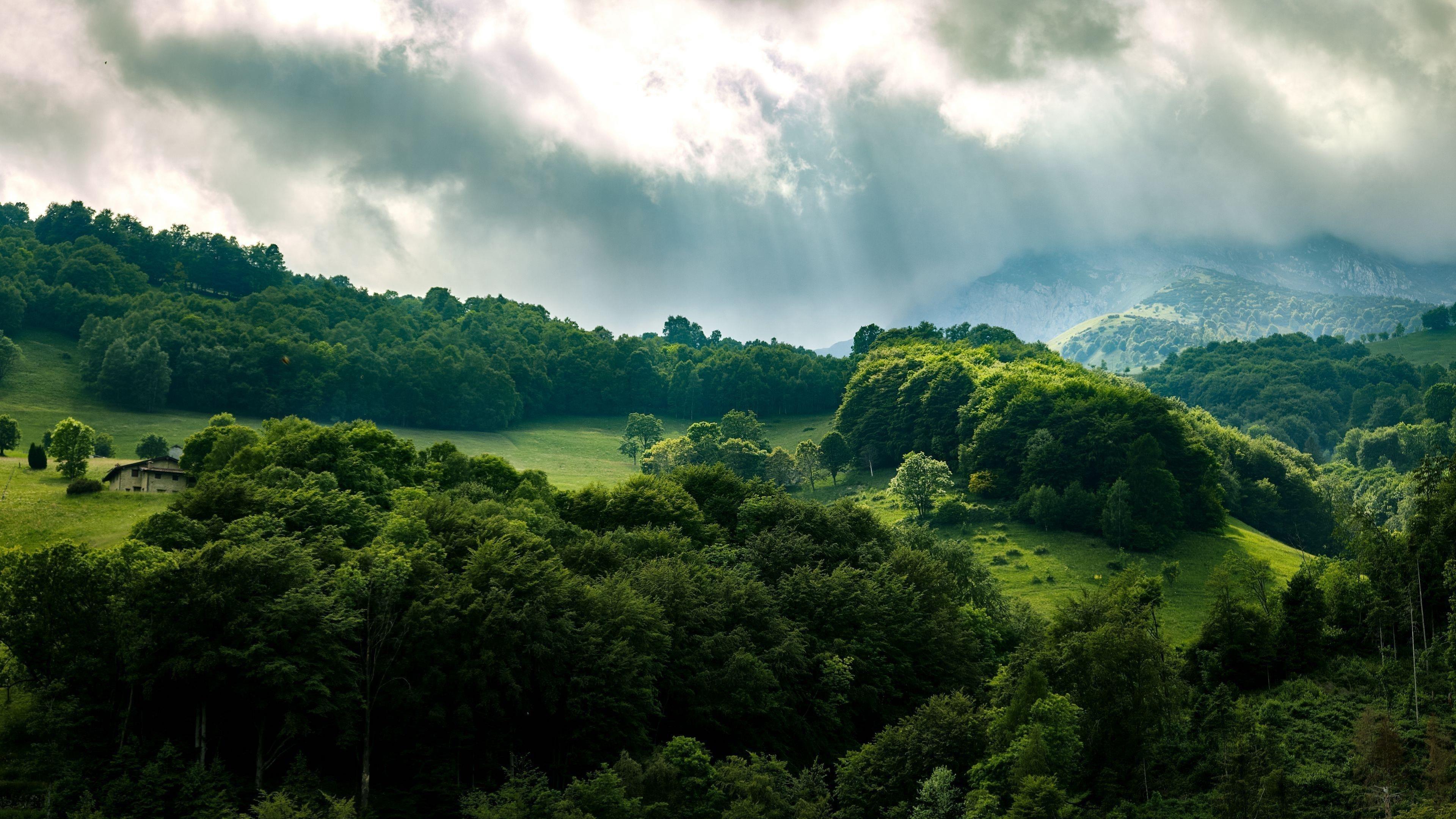 Зеленый лес деревья лучи обои скачать