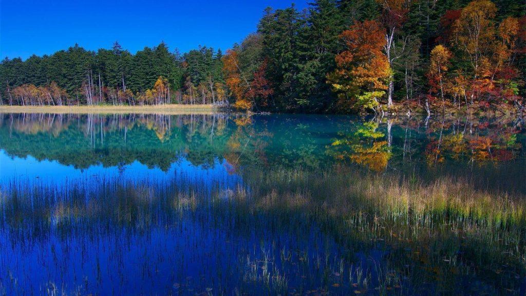 Река в окружении красочных осенних деревьев с листвой с отражением природы обои скачать