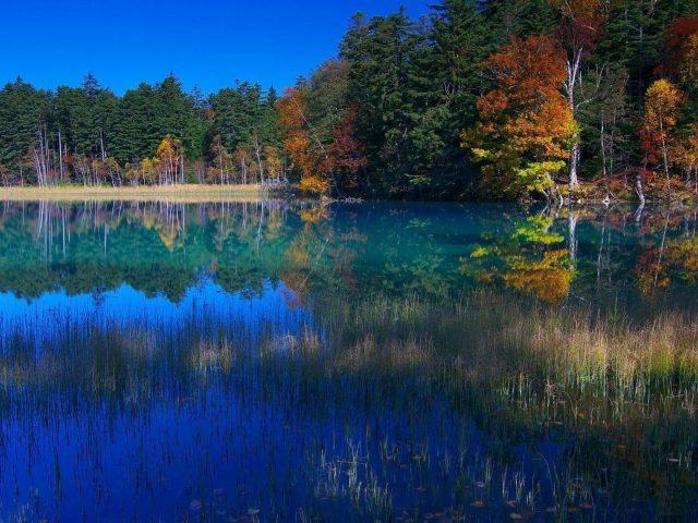 Река в окружении красочных осенних деревьев с листвой с отражением природы