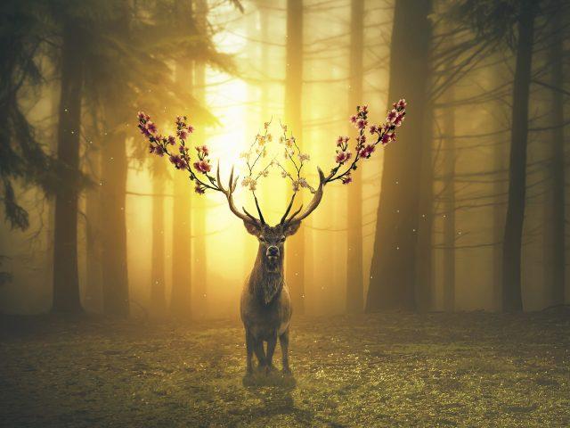 Весенний олень лесной