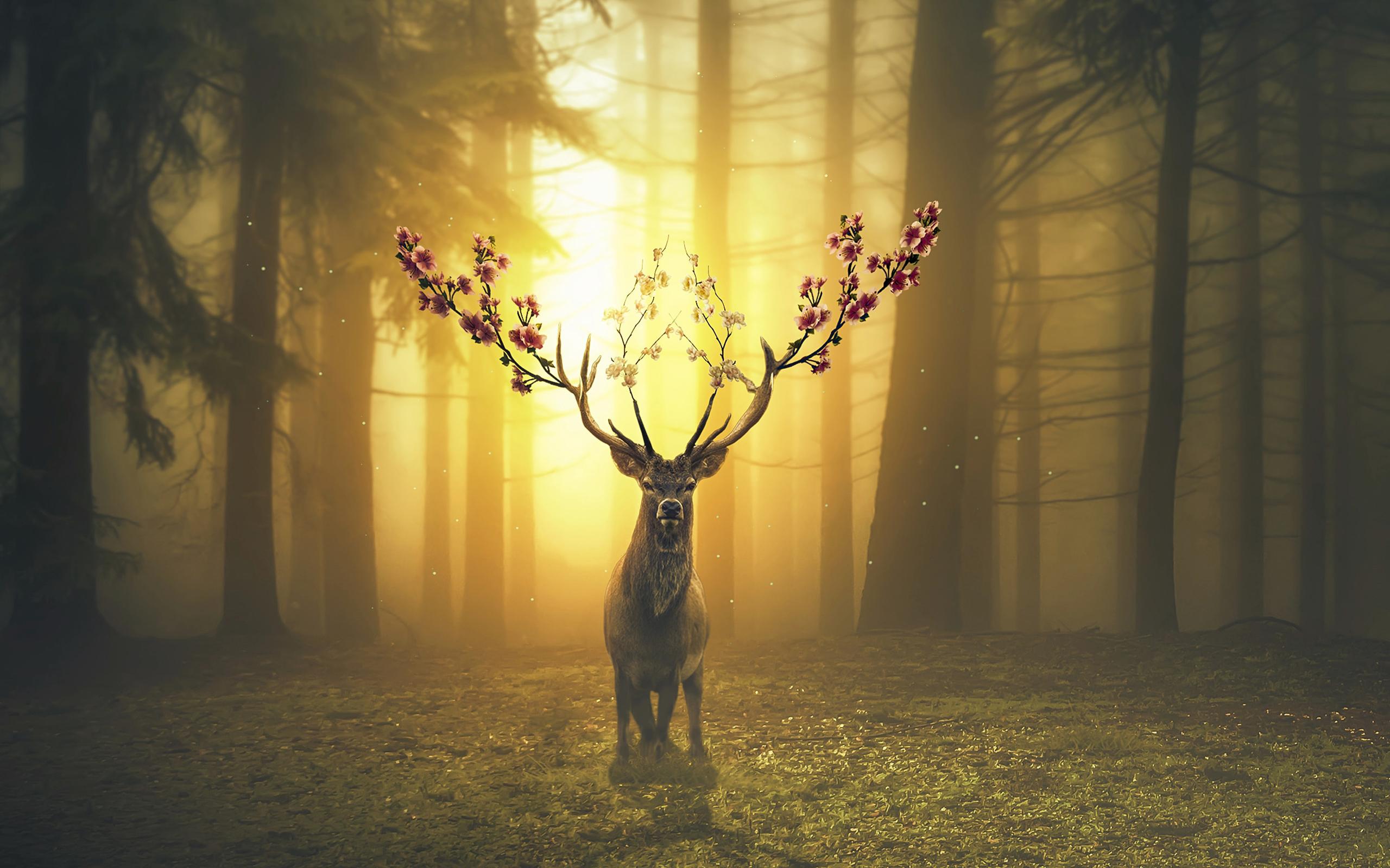 Весенний олень лесной обои скачать