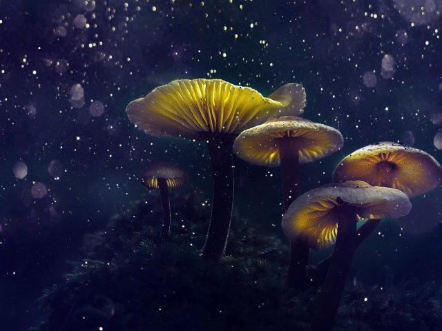 Волшебные грибы