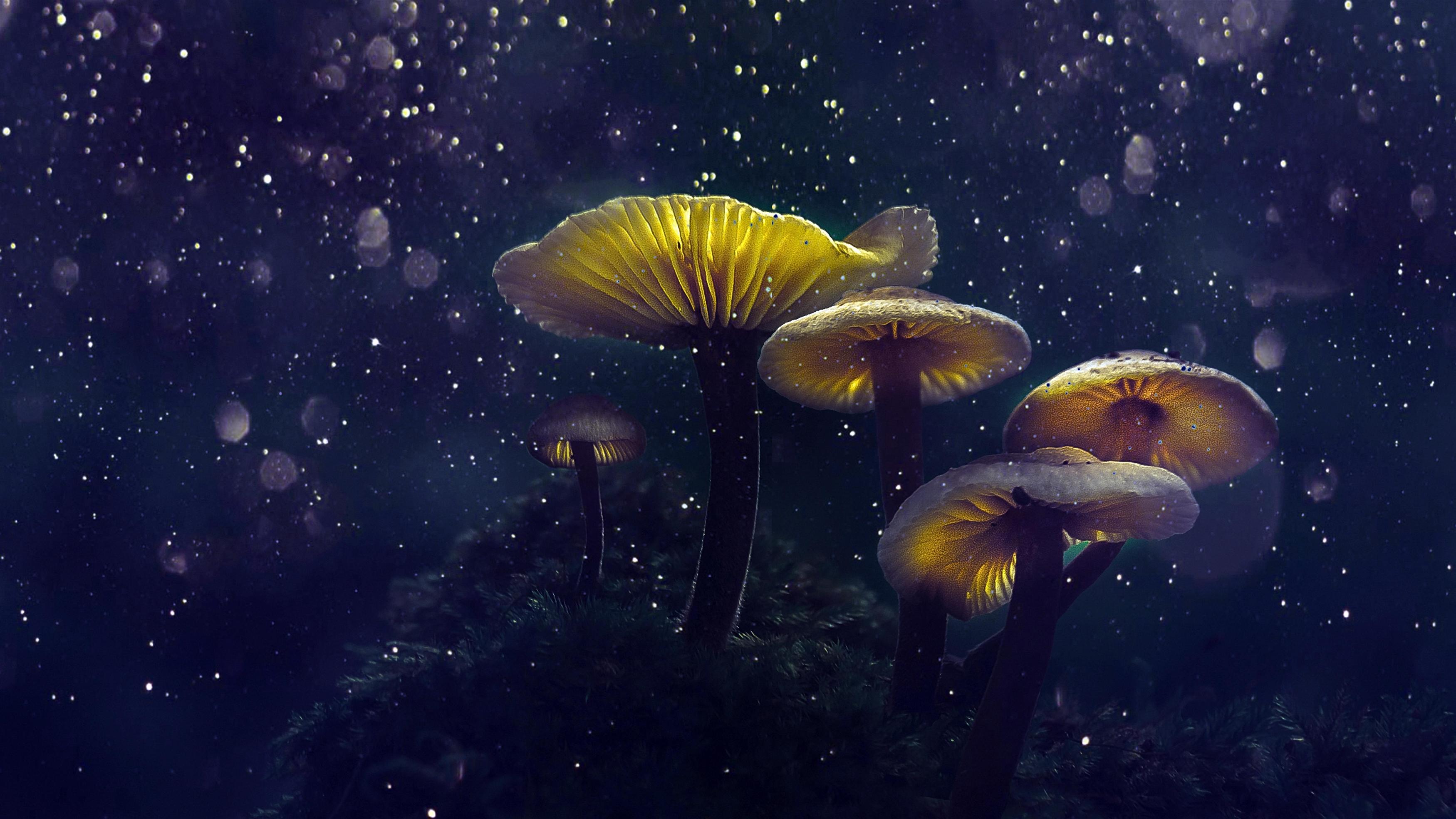 Волшебные грибы обои скачать