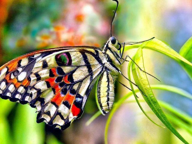 Красный черный желтый дизайн бабочка на зеленой траве в красочном размытом фоне бабочка