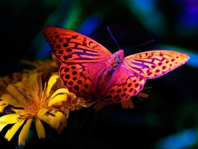 Красочная бабочка на желтом цветке бабочка