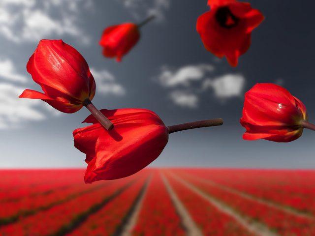 Лалибела гравитационные цветы