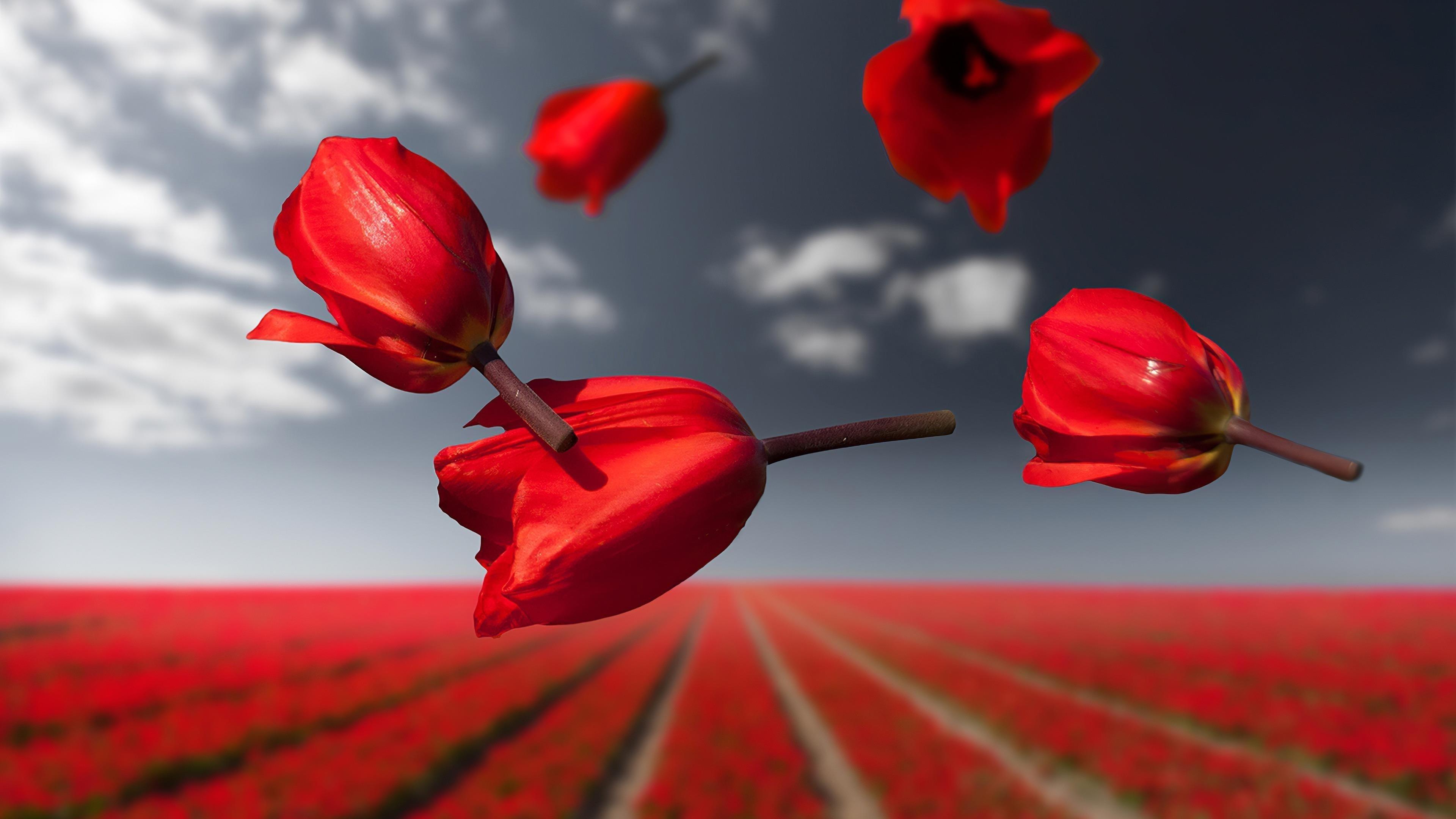 Лалибела гравитационные цветы обои скачать