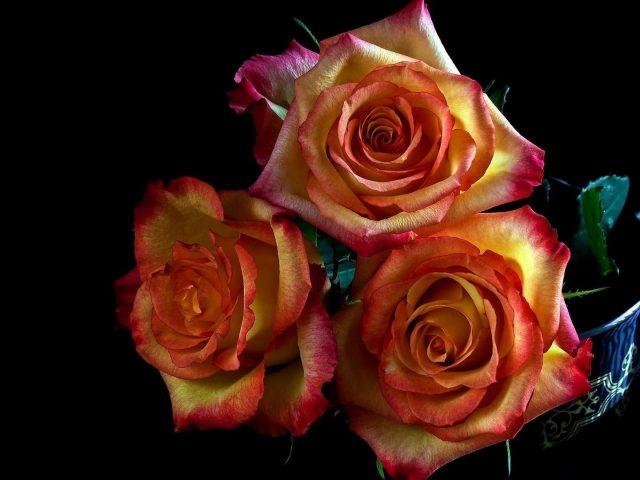 Желтые розовые лепестки цветы на черном фоне цветы
