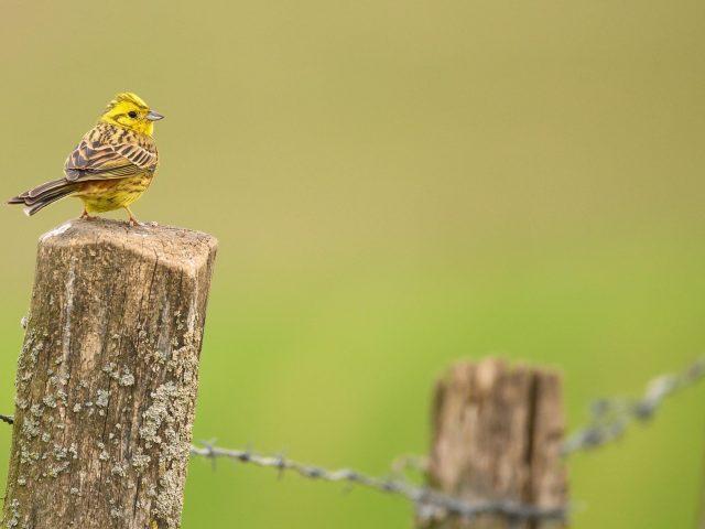 Животное птица
