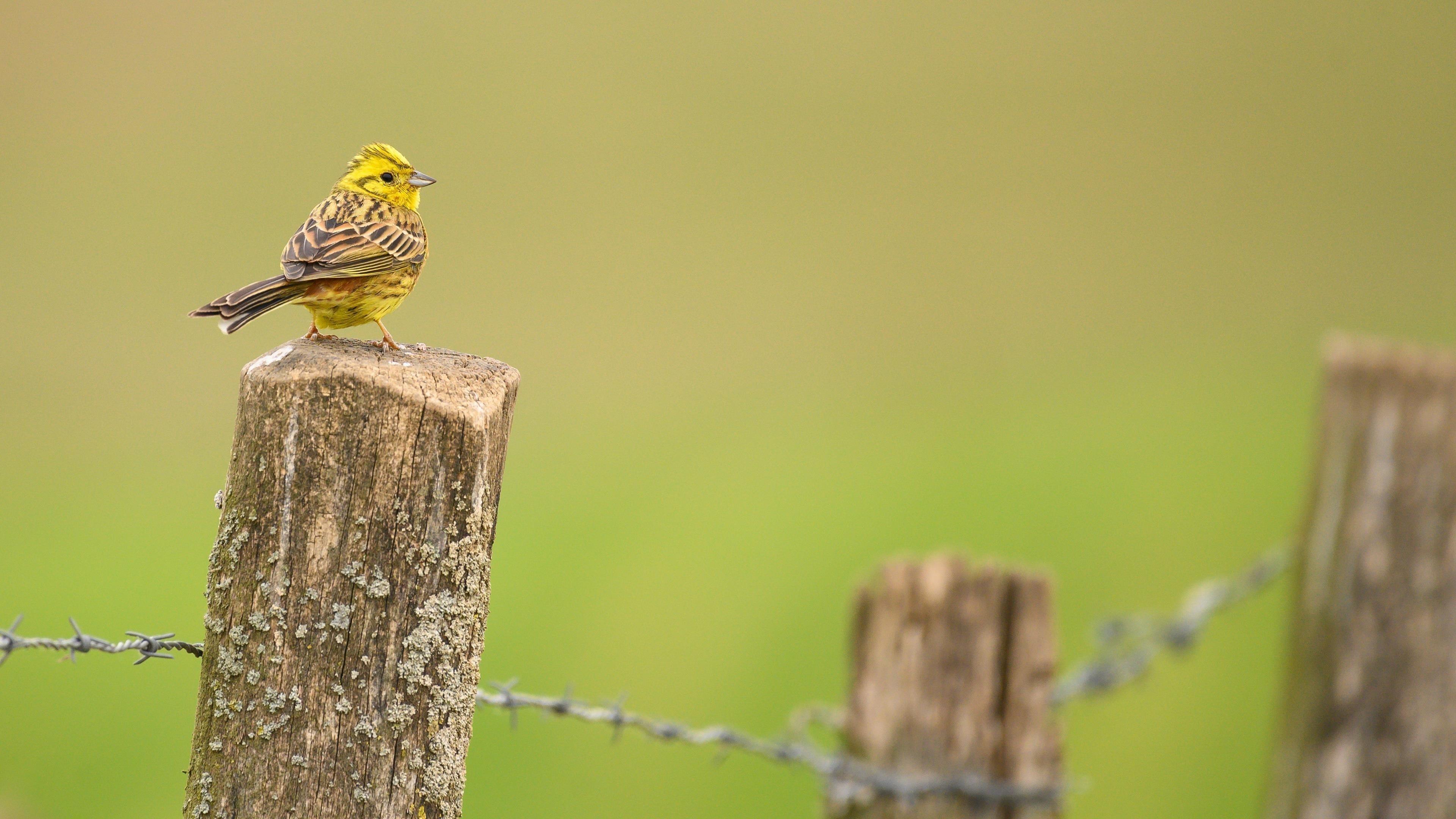 Животное птица обои скачать