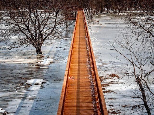 Искусственный мост сухое дерево природа