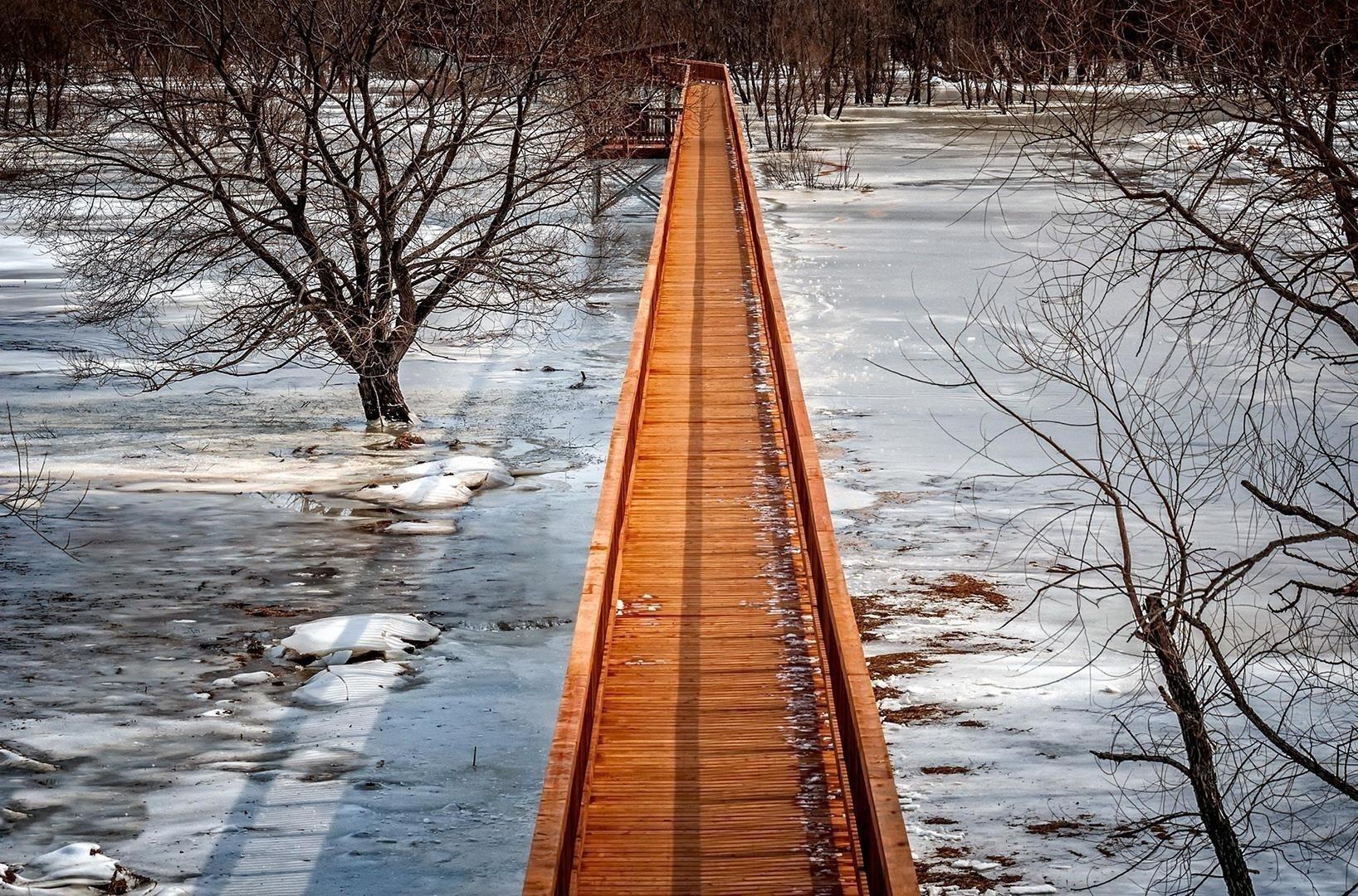Искусственный мост сухое дерево природа обои скачать