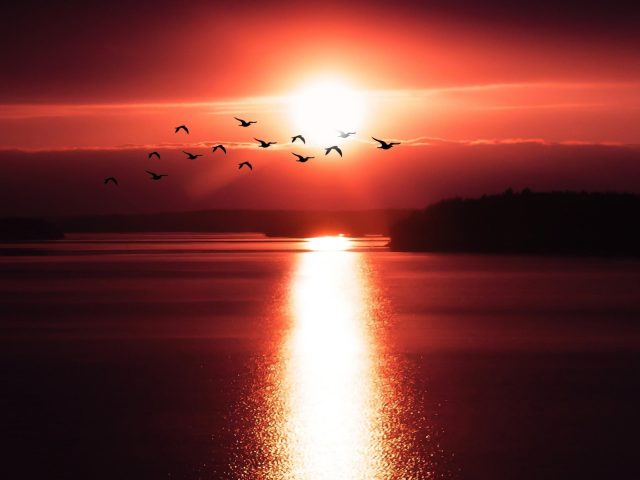 Летающие птицы над закатом