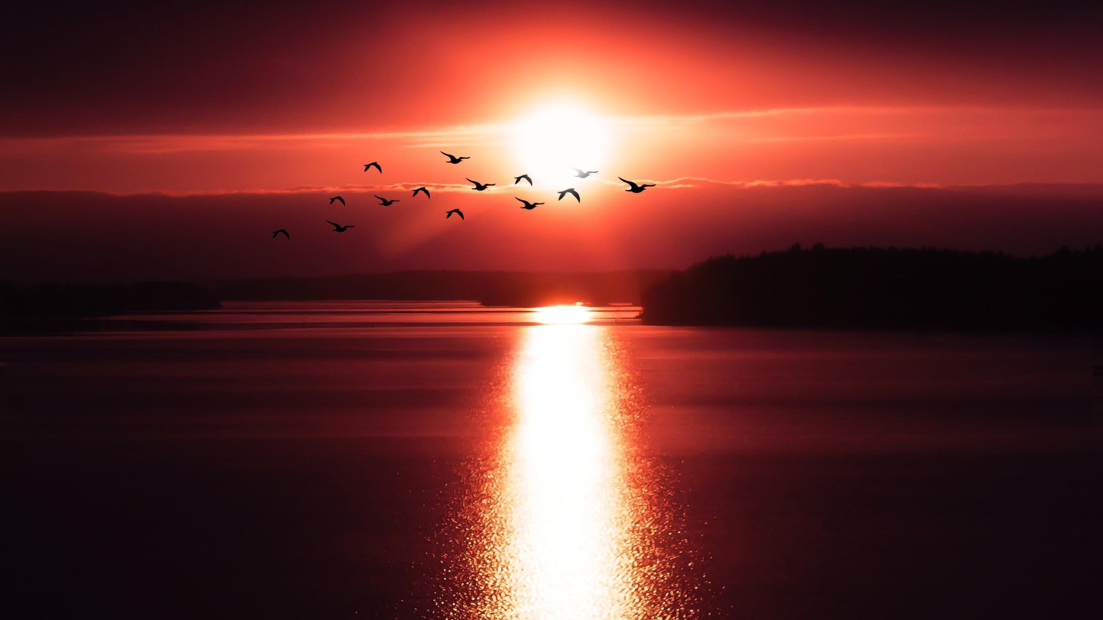 Летающие птицы над закатом обои скачать