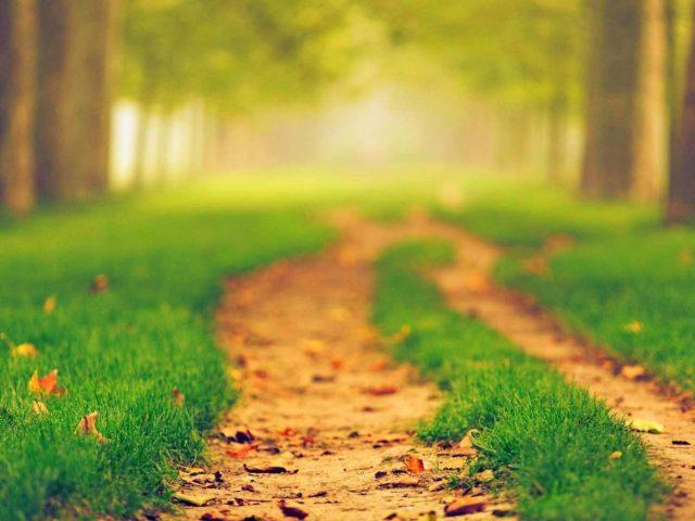 Тропинка между зеленой травой в размытом фоне деревьев природа
